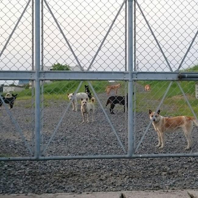 野犬を増やさない会【倉敷】のカバー写真