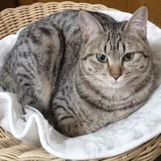 可愛いキジ猫さん!良い子です