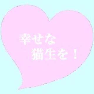 青い目と個性的な模様のシャムミックス熊本地震被災猫