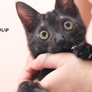 黒猫ゆいPちゃん 里親募集中!