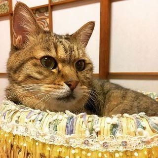 澄んだ緑の瞳のシニア猫 預かり・里親募集中