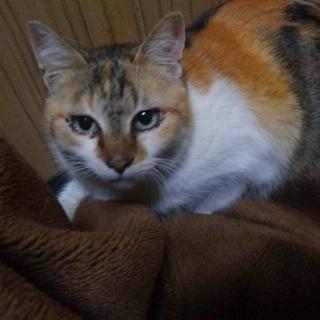 可愛いミケ猫♬