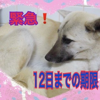 【追記】期限2/12 きれいな女の子です!