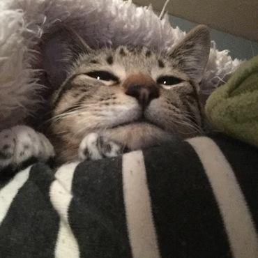 初めての腕枕