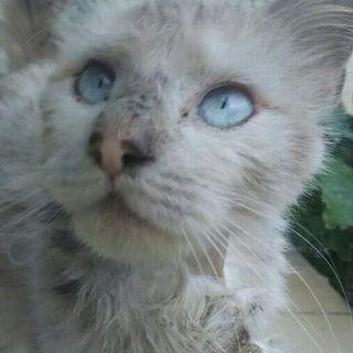 ボロボロ猫が美しくなりました