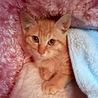 綺麗な顔立ちの子猫ちゃんに、キュン♡