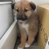 2か月子犬「モコ」女の子 サムネイル2