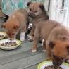 2か月子犬「ノート」男の子 サムネイル3