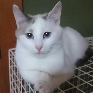 【タカ君】野良猫が餌場に連れて来た子猫