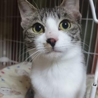 【シバ君】野良猫のお母さんが餌場に連れて来た子猫