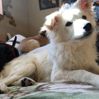 生後4か月の仔犬です。