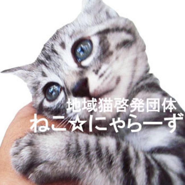 地域猫啓発団体ねこ☆にゃらーずのカバー写真