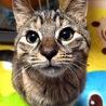 野良猫家族の保護