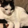 猫の里親さん募集します。 サムネイル2