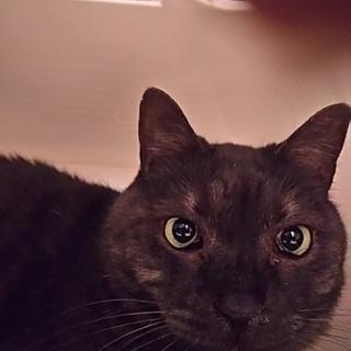 ◆おばあちゃんちの黒猫さん②◆