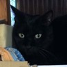 ◆おばあちゃんちの黒猫さん③◆