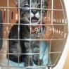 とても甘えん坊の猫ちゃんです サムネイル6