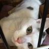 白ぶち猫 もっちー君