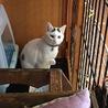 白ぶち猫 もっちー君 サムネイル2