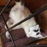 白ぶち猫 もっちー君 サムネイル5