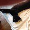 【トライアル中】甘えん坊の黒猫さん