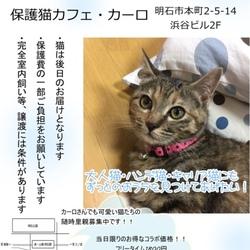 猫まみれ譲渡会 IN カーロ