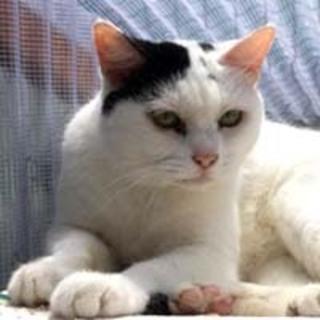 ◆おばあちゃんちの白黒ブチ猫さん◆