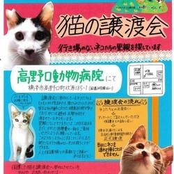 猫の譲渡会☆はしもとさくら猫の会 和歌にゃんず