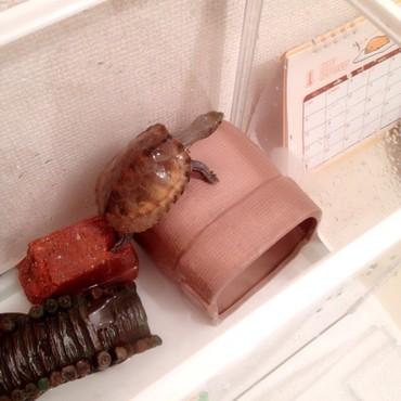 最近撮ったタロちゃん。やっぱり家に登ろうとします。