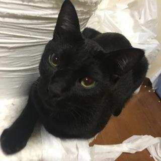可愛い黒猫そうくん