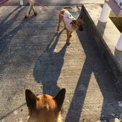 「保護犬りんちゃん、終生のおうちへ!」サムネイル3