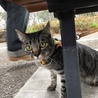 とても甘えん坊の猫ちゃんです サムネイル2