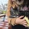 とても甘えん坊の猫ちゃんです サムネイル3