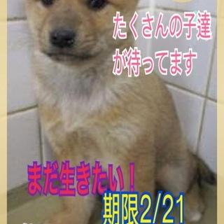 命の期限2/21 子犬ちゃんを助けてください!