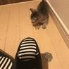 可愛い子猫3匹