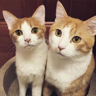 スリスリな茶白の美猫兄妹!