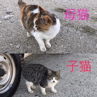 急募!ミケ猫ちゃんママとその子供
