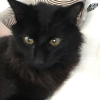 モフモフモフモフの黒猫さん