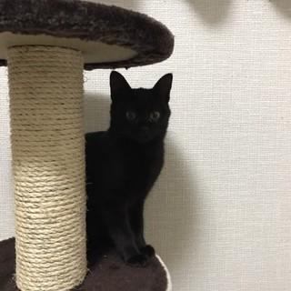 黒猫「すみれちゃん」生後5ヶ月で人馴れしています。