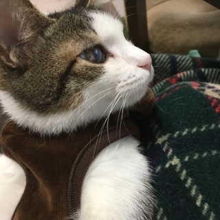 殺処分間近の子猫を預かり里親さん探してます③