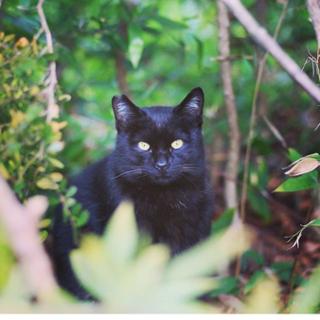 大きな黒猫可愛いお顔
