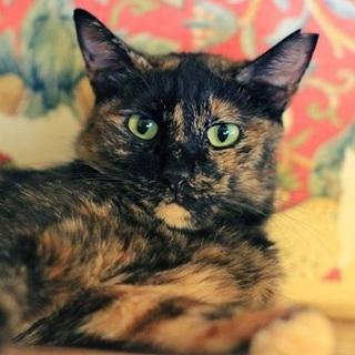 シュッとしたイイ女オーラのあるサビ猫