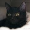 黒猫ピコくん6ヶ月の男の子