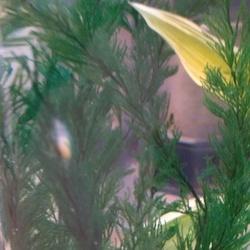 川魚の新生卵確認12日後