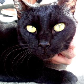 ☆おしとやかな黒猫ちゃん☆