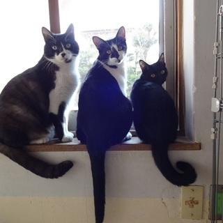 猫らしい猫 気ままです