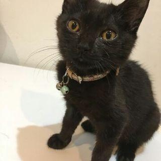 生後4ヶ月の黒猫ちゃんです。