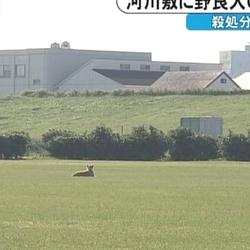 愛知県に住む私では考えられない四国の捨て犬事情