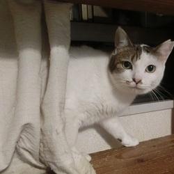 猫の方舟里親会・多頭飼育崩壊の猫たち
