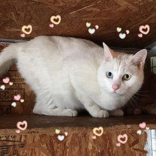 おっとりとした白猫